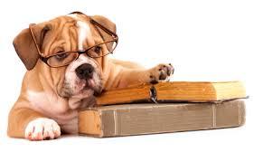 Bildergebnis für Hund und recht